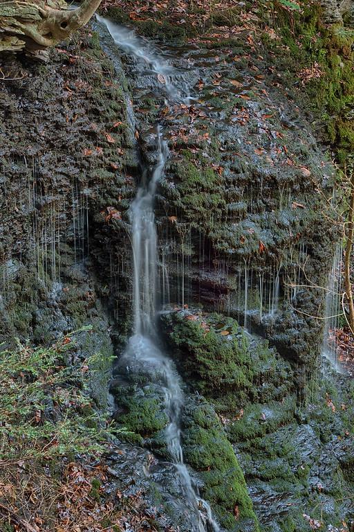 November 11 - Brookfield Horse Trail System