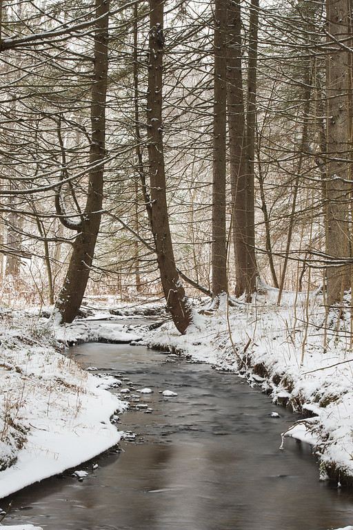 February 9 - Shawler Brook in the Charles E Baker State Forest